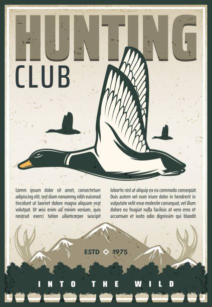 stockillustraties, clipart, cartoons en iconen met vector vintage poster voor eend jacht club - roofdieren