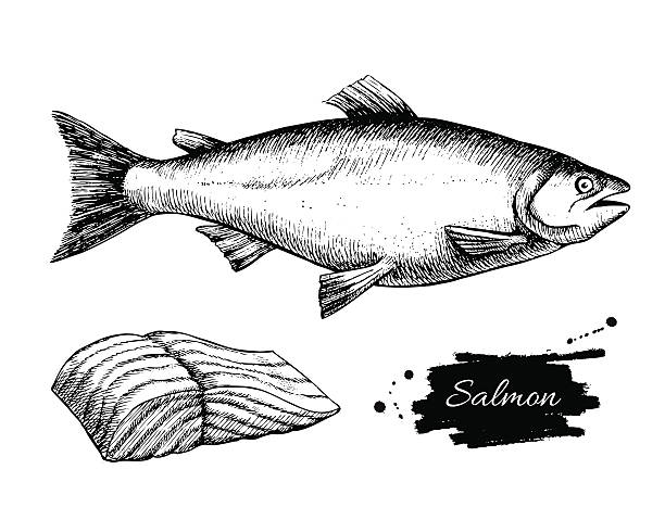 Vector vintage salmon drawing. Hand drawn monochrome seafood ill Vector vintage salmon drawing. Hand drawn monochrome seafood illustration. Great for menu, poster or label. cooking black and white stock illustrations