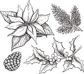 Vector vintage set of hand drawn, tradition Christmas decoration plants. Great for invitation and greeting cards