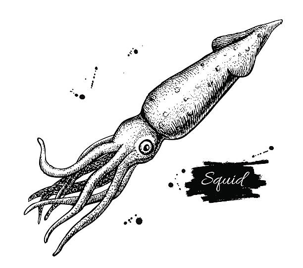 Royalty Free Squid Clip Art, Vector Images & Illustrations ...