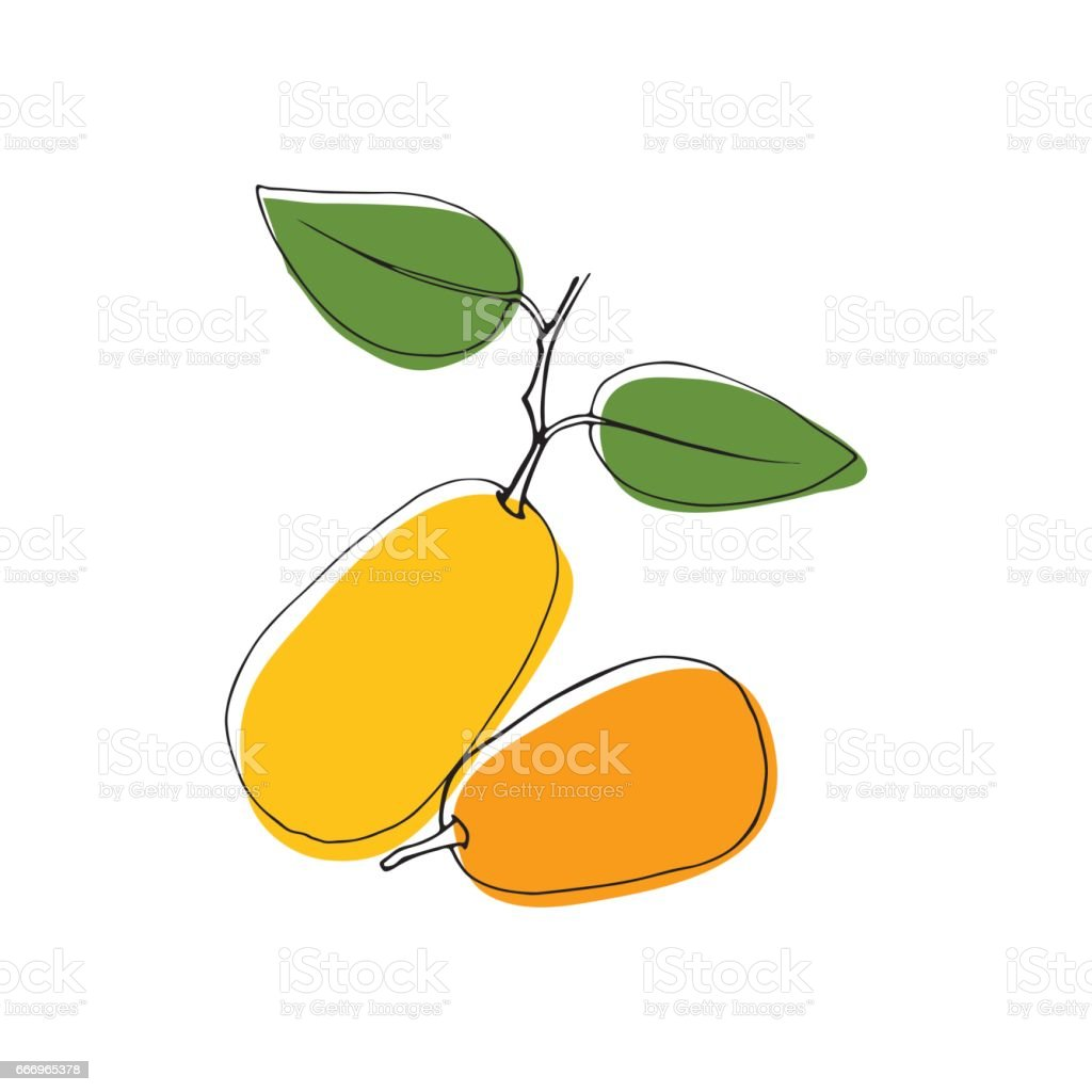 Vector vintage style hand drawn kumquat fruits. Isolated color design elements. Good for cards, invitations, gift wrap, print, scrapbooking, kitchen theme, menu. vector art illustration