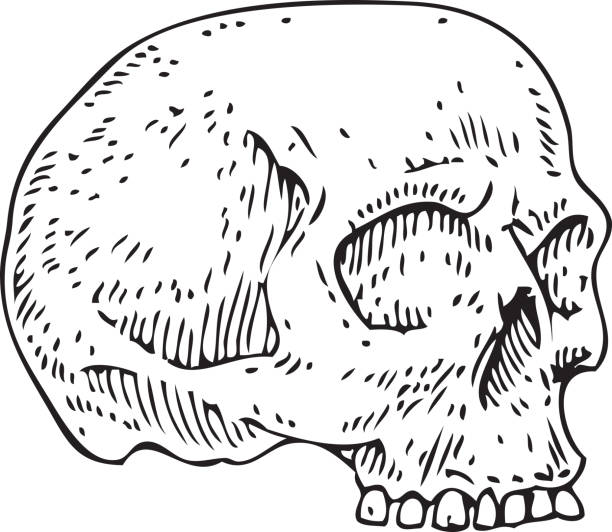30 Forensic Anthropology Illustrations Royalty Free Vector Graphics Clip Art Istock