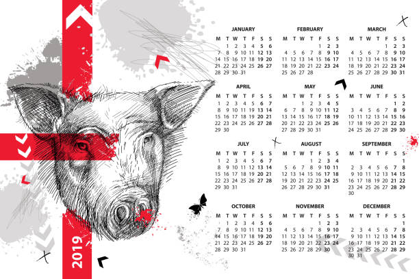 vector wall calendar for 2019 year in trash polka with sketch head of pig in black. monday start. symbol of chinese new year. - wildlife calendar stock illustrations, clip art, cartoons, & icons