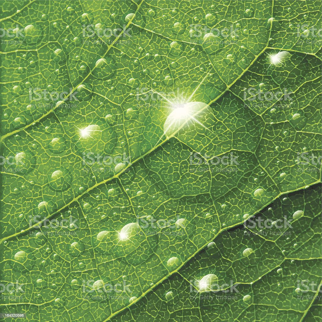 Vector water drops on green leaf macro background. royalty-free stock vector art