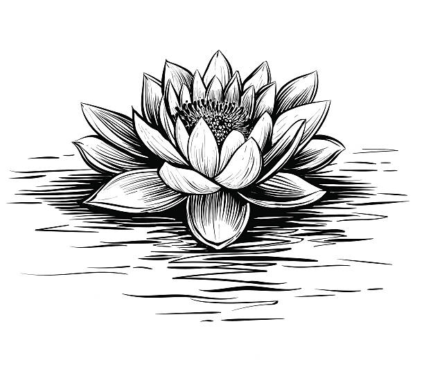 Best Water Lily Illustrations, Royalty-Free Vector ...