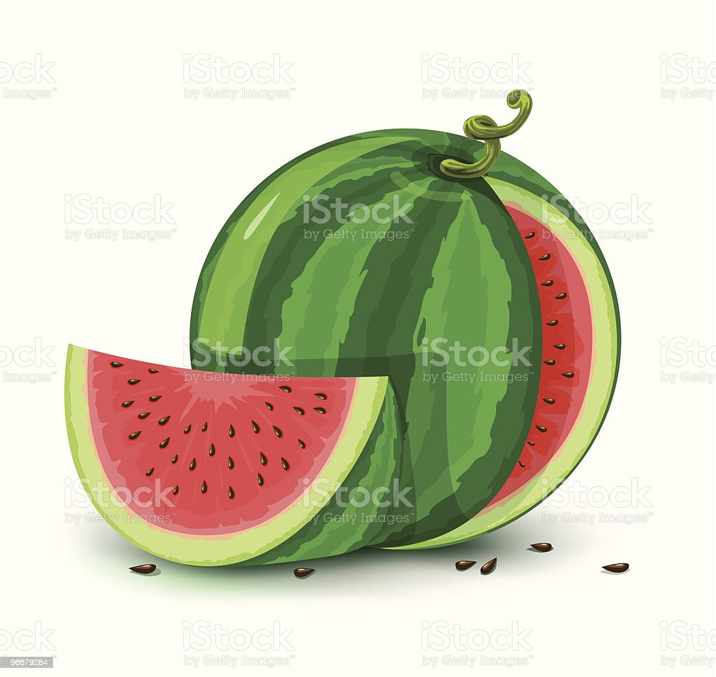vector water melon fruit isolated on white royalty-free stock vector art