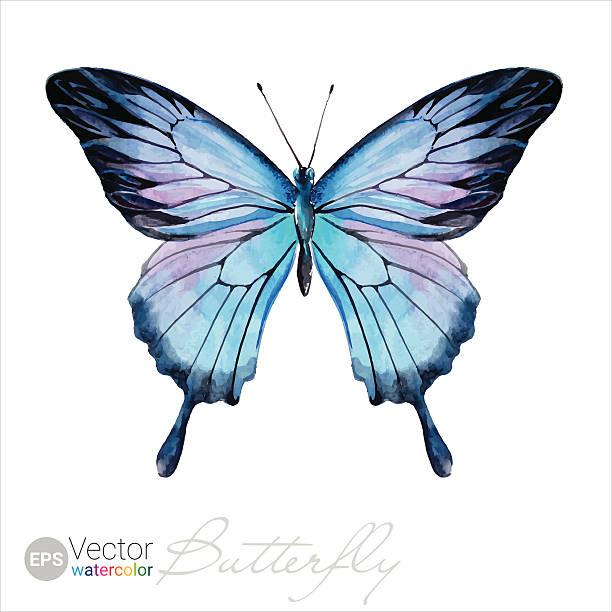 ウォーターカラーバタフライのベクトルオオルリアゲハ - チョウ点のイラスト素材/クリップアート素材/マンガ素材/アイコン素材