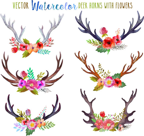 vector watercolor deer horns - deer antlers stock illustrations, clip art, cartoons, & icons