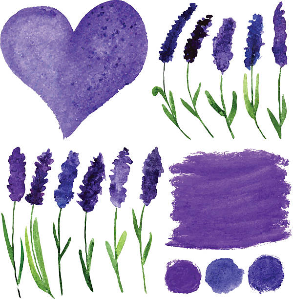 Vector watercolor elements set with lavender. Vector illustration for greeting cards with watercolor lavender. Colorful theme for your design, prints and illustrations lavender color stock illustrations