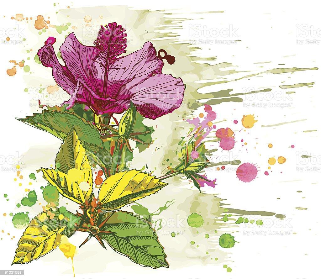 Vector watercolor flower - Hibiscus royalty-free stock vector art