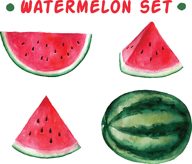 Vector watercolor hand drawn watermelon set. Vector watercolor hand drawn watermelon set. Organic food illustration. fruit clipart stock illustrations