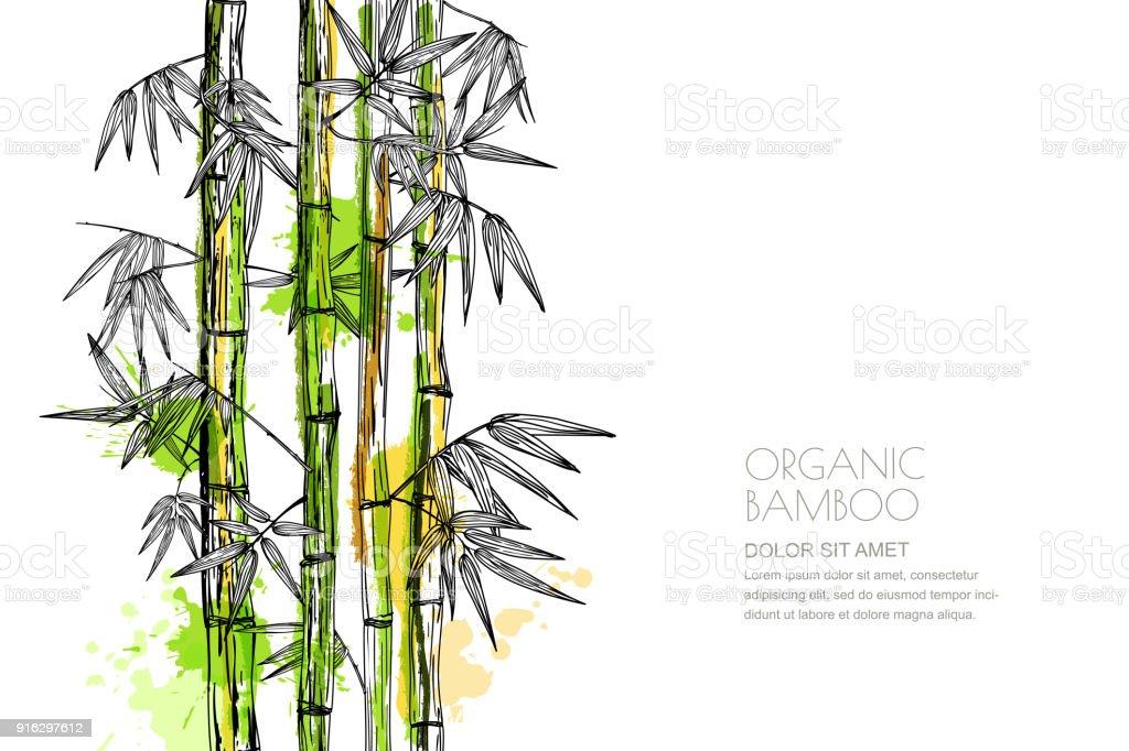 竹的向量水彩插圖。設計印刷, 亞洲水療, 按摩, 化妝品包裝, 傢俱材料。向量藝術插圖