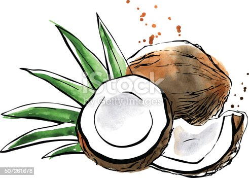Vector illustration of super food Coconut. Organic healthy food. Black outlines and bright watercolor stains, splashes and drips. Hand drawn isolated objects on white background.