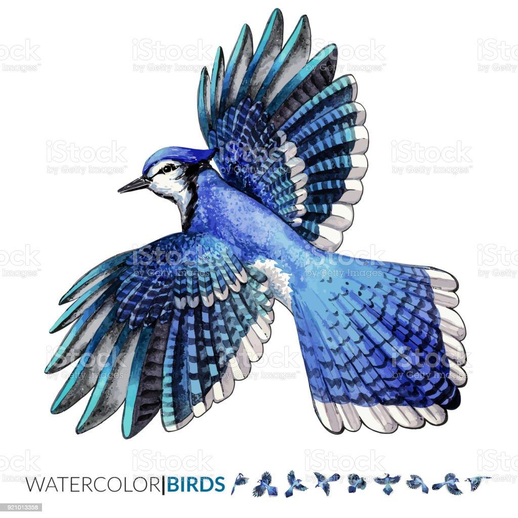 Vector watercolor illustration of the Blue Jay tropical bird flying vector art illustration