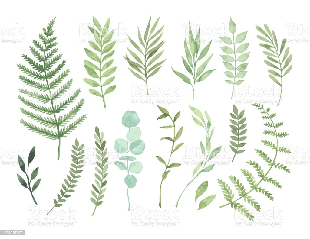 Vector watercolor illustrations. Botanical clipart. Set of Green leaves, herbs and branches. Floral Design elements. Perfect for wedding invitations, greeting cards, blogs, posters and more royalty-free vector watercolor illustrations botanical clipart set of green leaves herbs and branches floral design elements perfect for wedding invitations greeting cards blogs posters and more stock illustration - download image now
