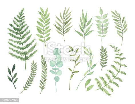 istock Vector watercolor illustrations. Botanical clipart. Set of Green leaves, herbs and branches. Floral Design elements. Perfect for wedding invitations, greeting cards, blogs, posters and more 953267972
