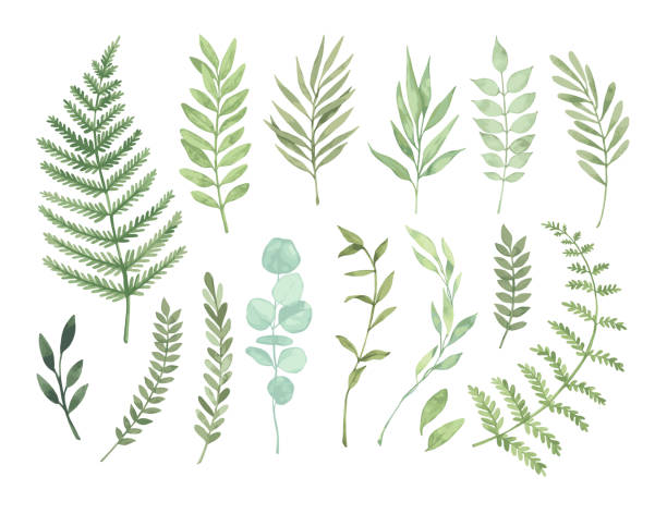 illustrazioni stock, clip art, cartoni animati e icone di tendenza di vector watercolor illustrations. botanical clipart. set of green leaves, herbs and branches. floral design elements. perfect for wedding invitations, greeting cards, blogs, posters and more - foglie