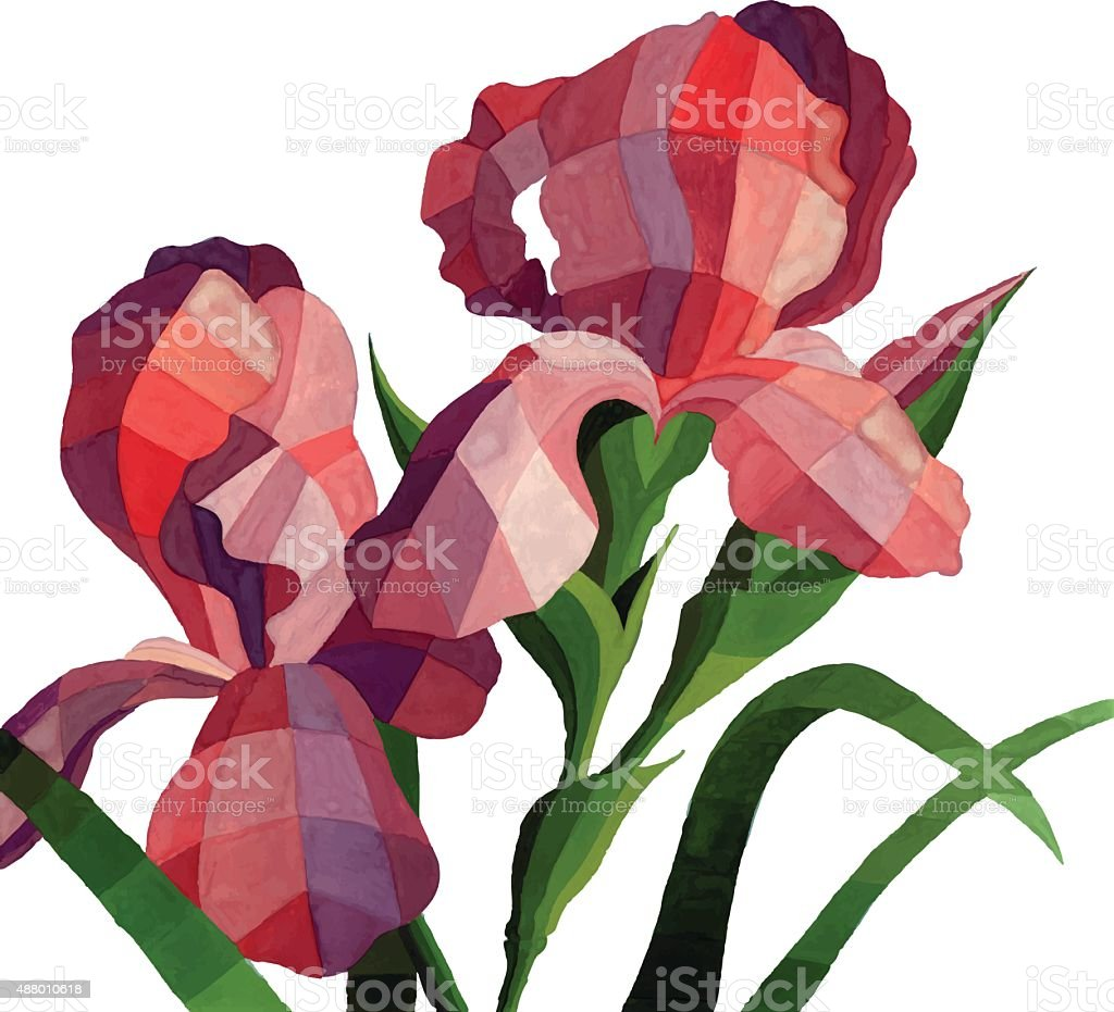 Vector Watercolor Iris Flowers Isolated On White Background Stock ...