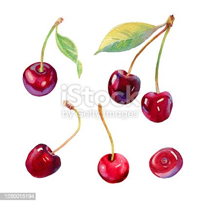 istock Vector watercolour cherry illustration. Hand drawn cherries set. Fresh sweet and tasty cherries. Bright and fresh illustration. Watercolor botanical painting. Beautiful tasty berries isolated on white 1250015194