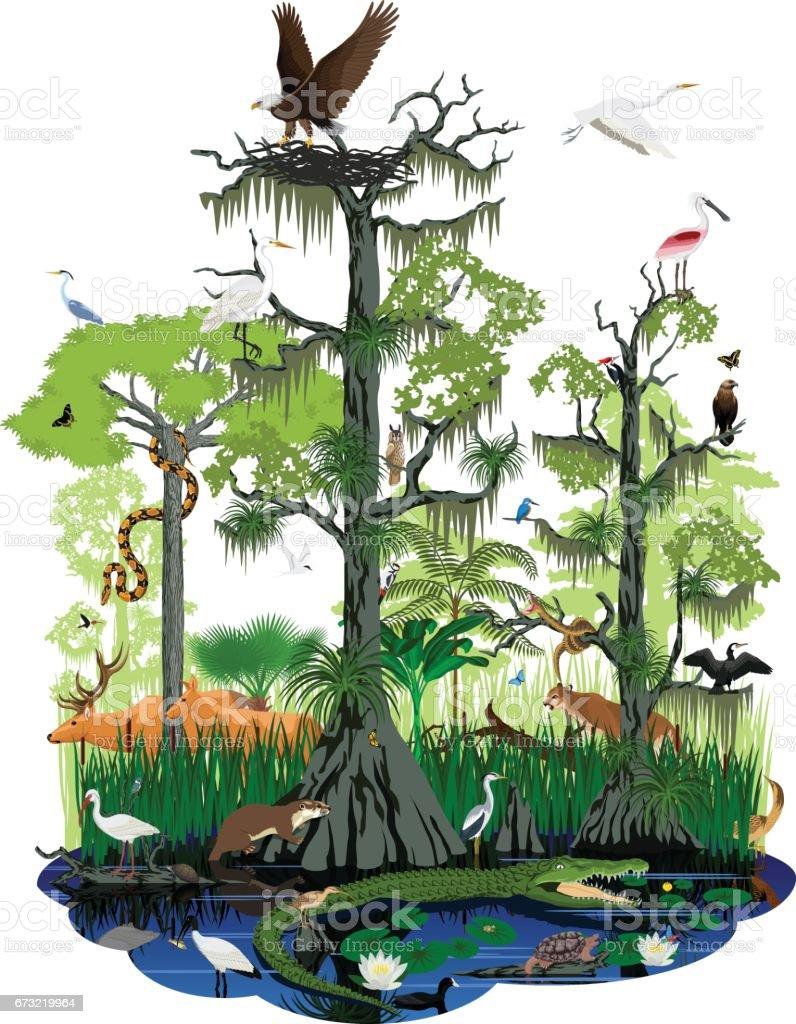 vector wetland or Florida Everglades landscape with different wetland animals vector art illustration