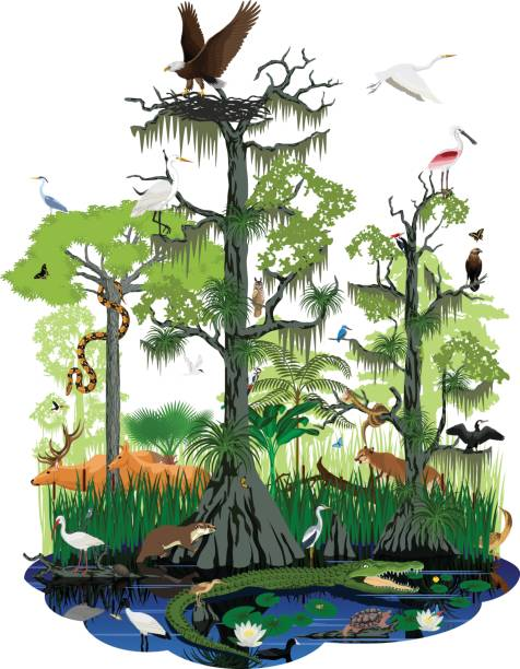 stockillustraties, clipart, cartoons en iconen met vector wetland of florida everglades landschap met verschillende wetland dieren - cipres
