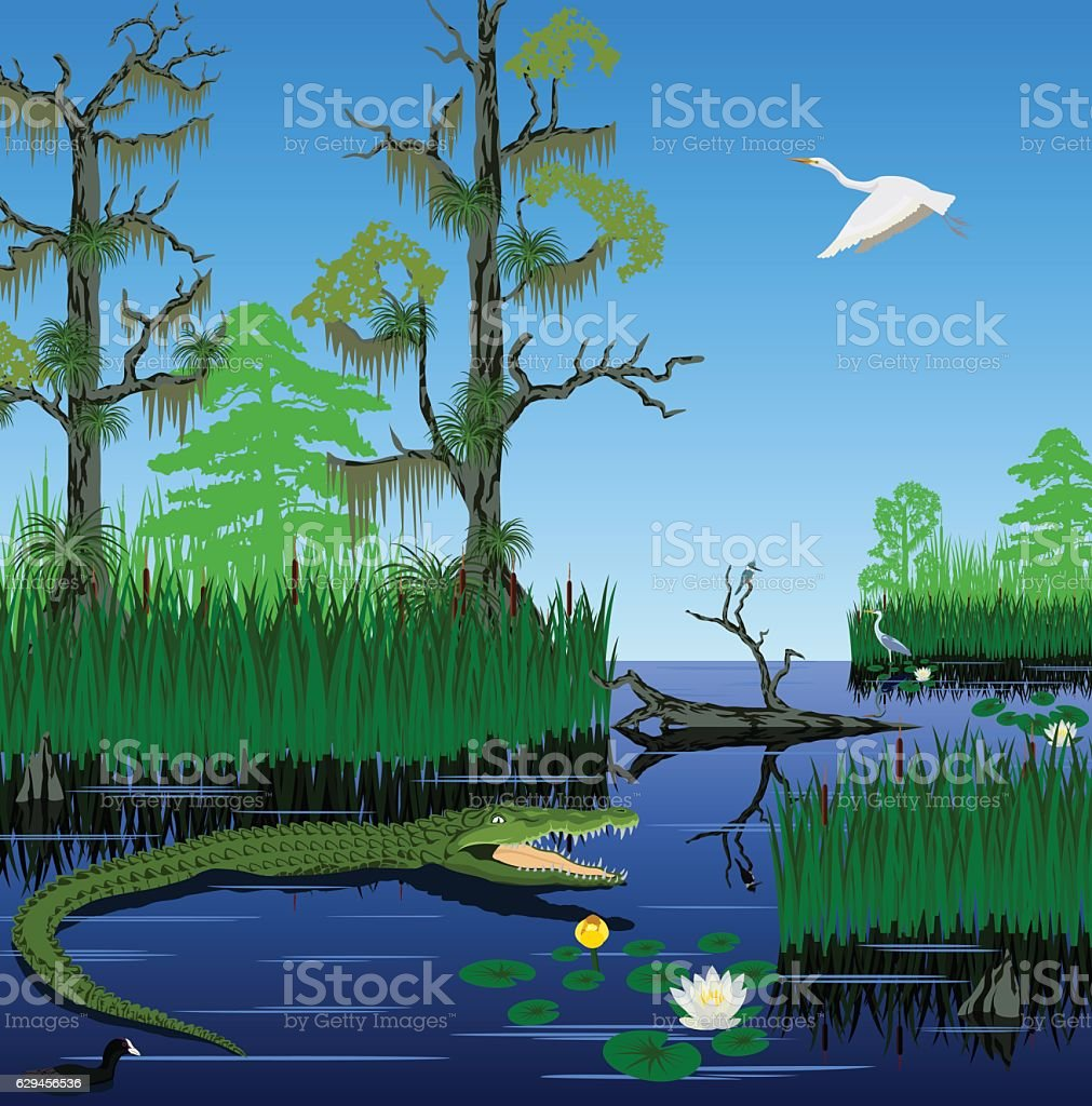 vector wetland Pantanal Florida Everglades landscape vector art illustration