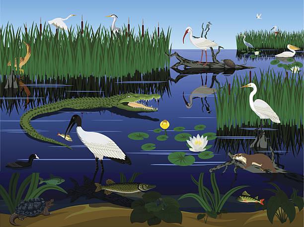 stockillustraties, clipart, cartoons en iconen met vector wetland pantanal florida everglades landscape with animals - wildplassen