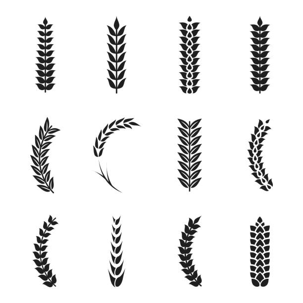 Vector wheat ears icons. Oat and wheat grains vector art illustration