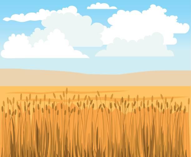 ilustraciones, imágenes clip art, dibujos animados e iconos de stock de campo de trigo vector - straw field