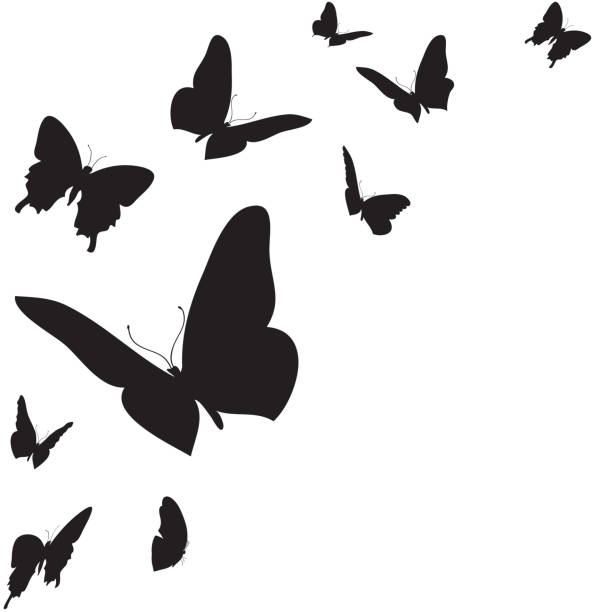 vector white background. - butterfly stock illustrations