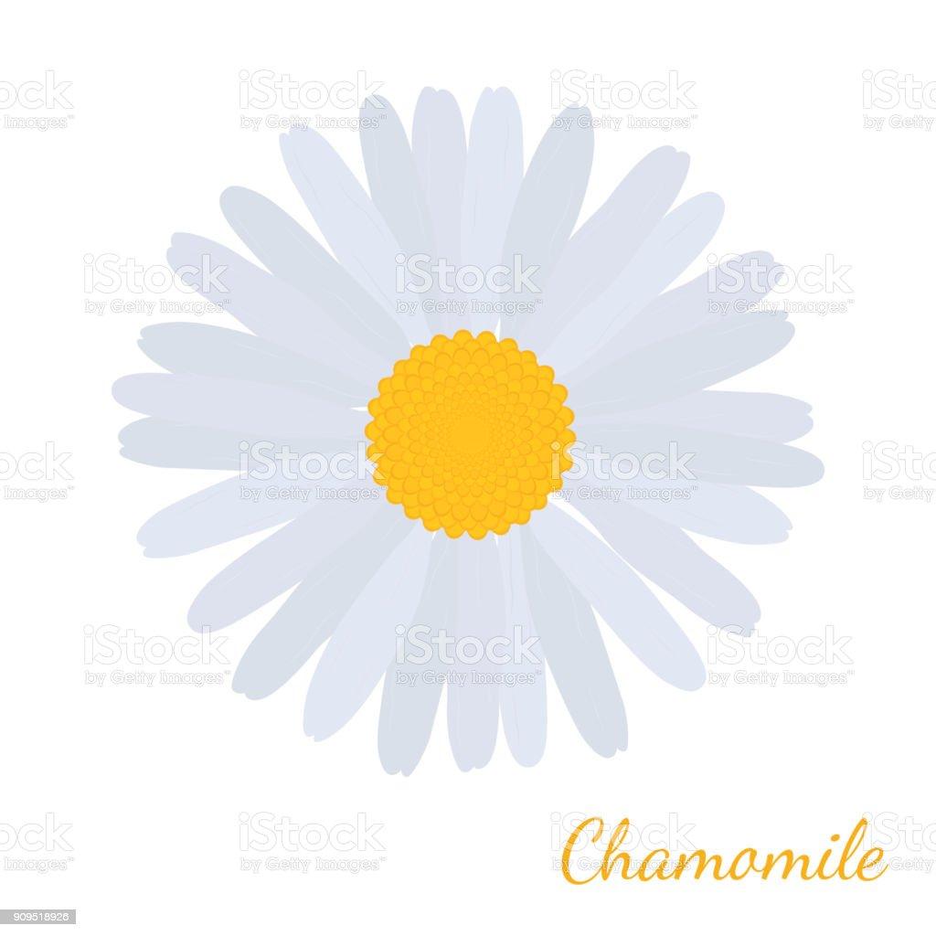 Vector white daisy chamomile herbal cosmetics plant botanical flower vector white daisy chamomile herbal cosmetics plant botanical flower in cartoon flat style for izmirmasajfo