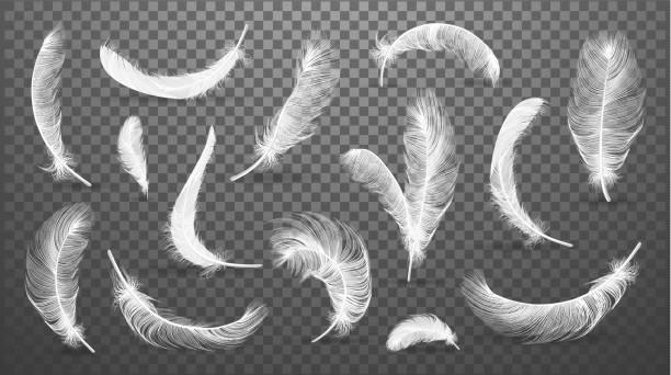 illustrazioni stock, clip art, cartoni animati e icone di tendenza di vector white feathers collection, set of different falling fluffy twirled feathers, isolated on transparent background. realistic style, vector 3d illustration. - piume colorate
