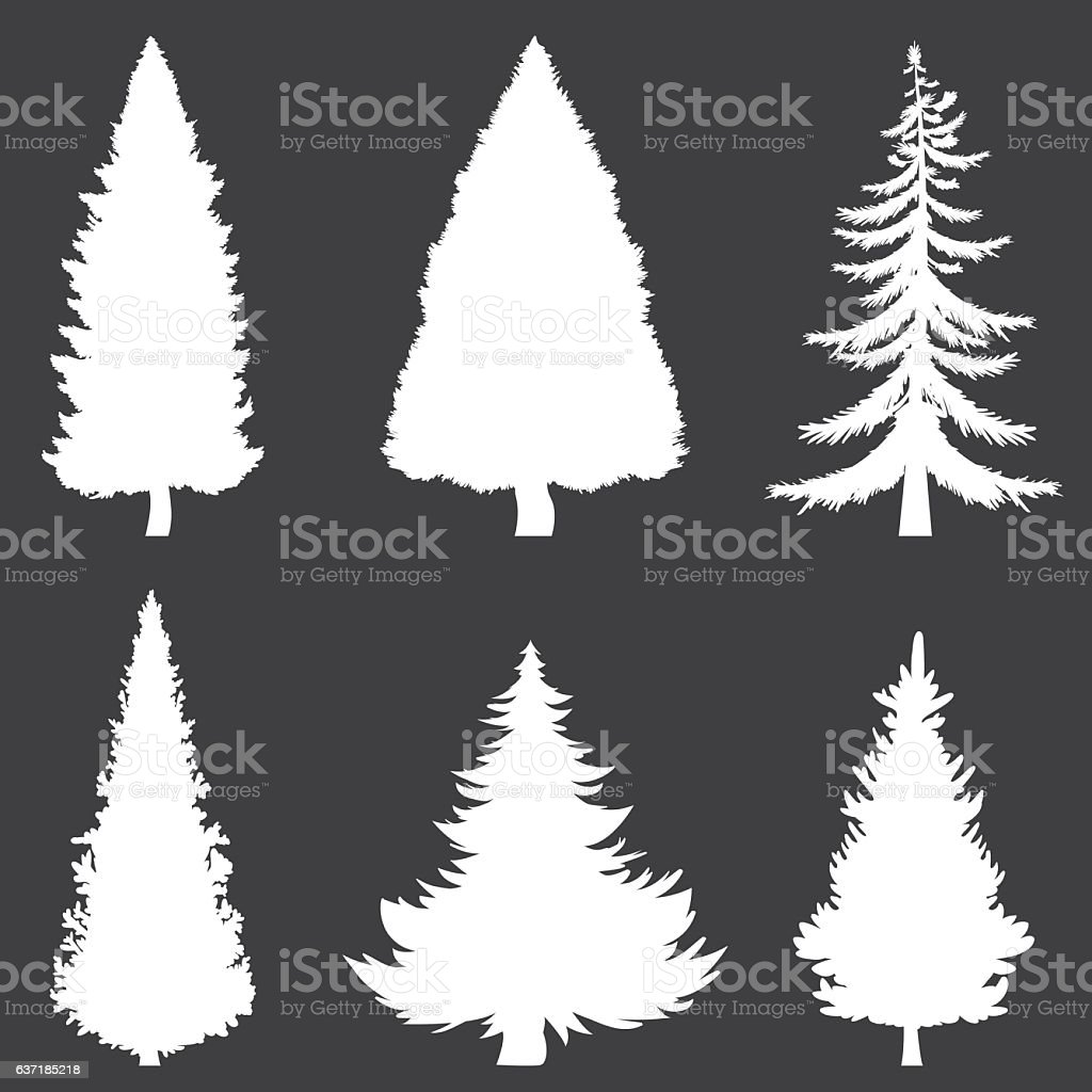 Vector White Silhouettes Of 6 Pine Trees On Black Background Stock