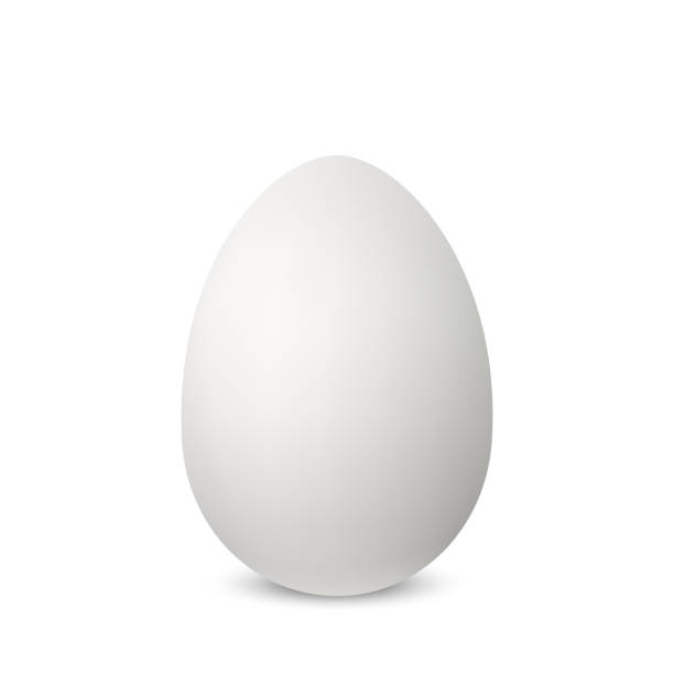 Vector white single realistic animal egg. Vector white single realistic animal egg. Chicken egg isolated with soft shadows on white background. Template for Easter holiday. 3D illustration egg stock illustrations