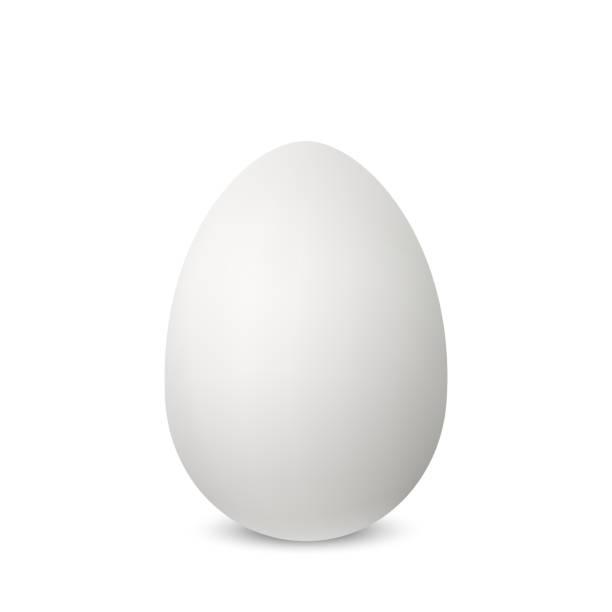 bildbanksillustrationer, clip art samt tecknat material och ikoner med vector vita enda realistiska äggets. - ägg