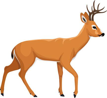 vector white tiled deer illustration