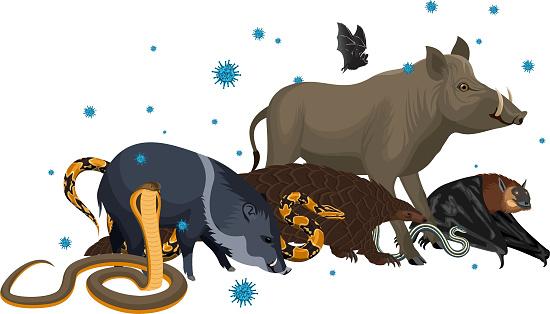 vector wild animal with coronavirus infection: pangolin, bat, pig, snake