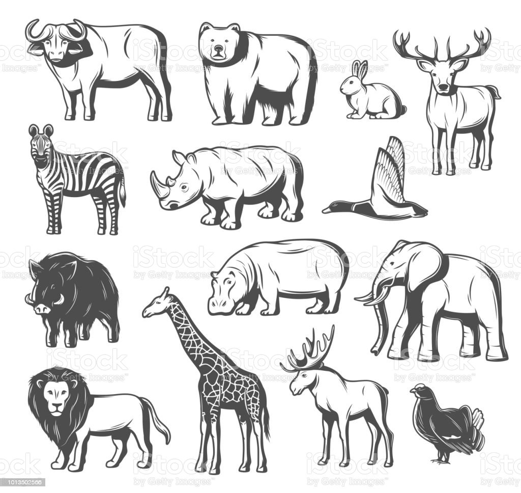 Vector Wild Animals And Birds Icons Stock Illustration - Download Image Now  - iStock