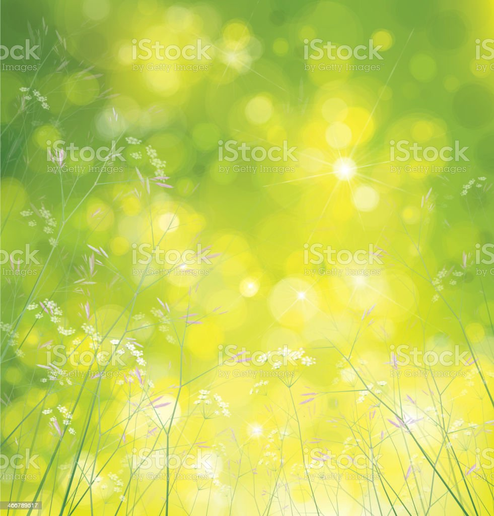 Vector wildflowers background. royalty-free stock vector art