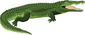 vector Wildlife crocodile