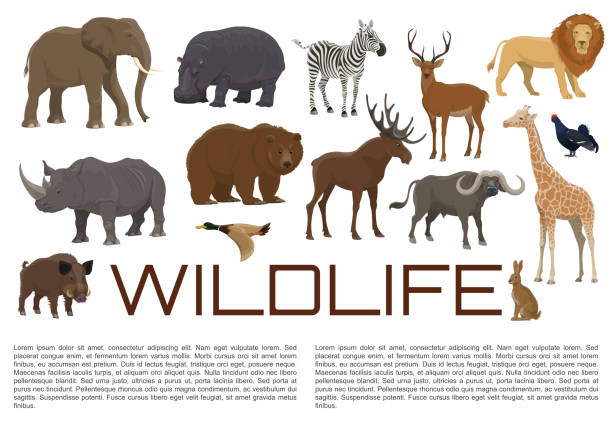 Vector wildlife poster of wild animals Wild animals and birds poster for wildlife zoo or hunt. Vector African giraffe, hippopotamus or rhinoceros and lion, elk or deer and buffalo, bear with duck and blackcock or rabbit and hog ducking stock illustrations