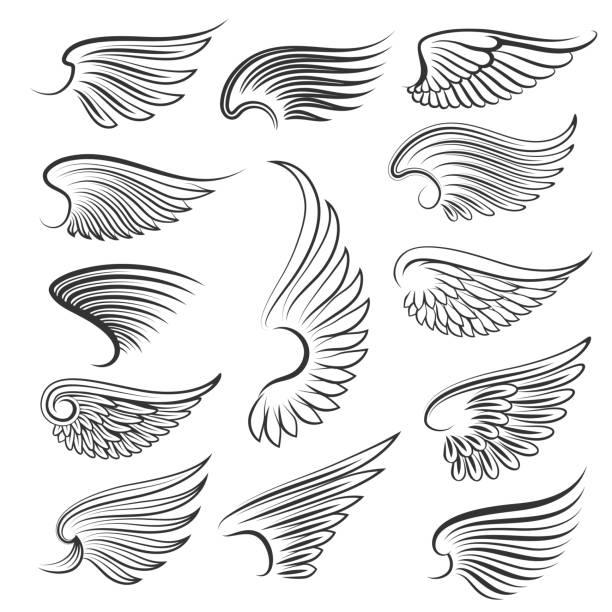 illustrations, cliparts, dessins animés et icônes de vector wings isolated on white background - tatouages d'anges