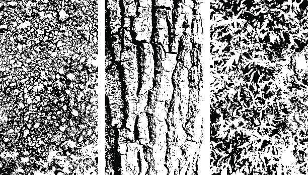 vector wooden bark, stone and moss texteres - moss stock illustrations