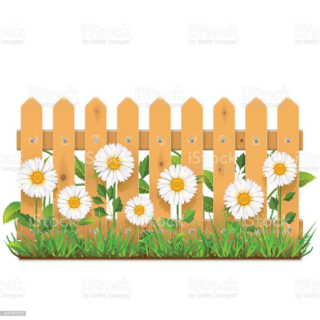 Vector Wooden Fence with Camomiles vector art illustration