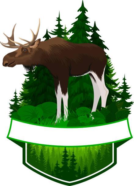 bildbanksillustrationer, clip art samt tecknat material och ikoner med vector skogsmark emblem med älgtjur - älg sverige