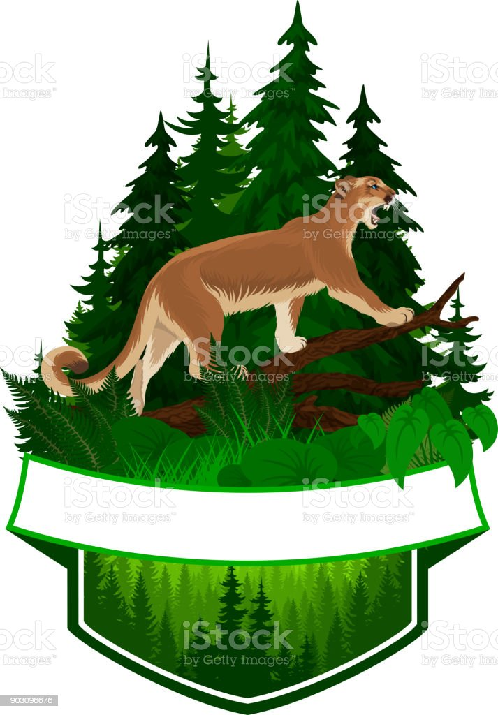 vector woodland emblem with puma cougar (Puma concolor) or mountain lion vector art illustration
