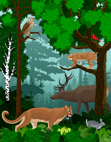 vector woodland green forest trees backlit with cougar puma, lynx, eagle owl, rabbit, red cardinal and elk (Each individual animal is in my portfolio)