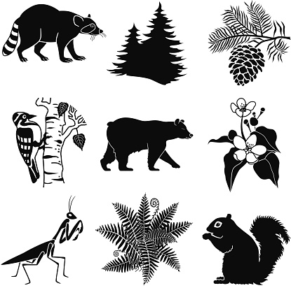 vector woodland wildlife in black and white