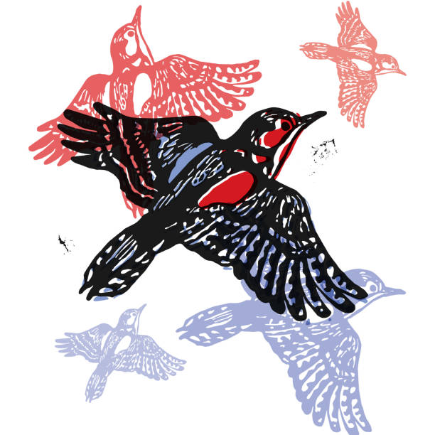 Vector woodpeckers in abstract composition Vector woodpeckers in abstract composition. Linocut woodpeckers in flight in different colors on white background linocut stock illustrations