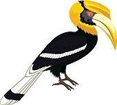 vector yellow billed hornbill, great hornbill isolated